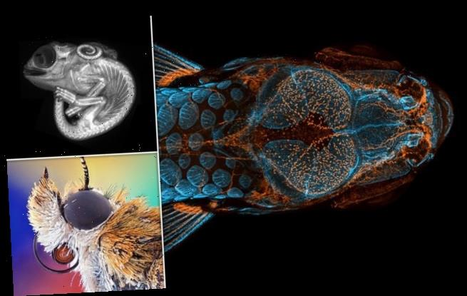 Zebrafish skeleton close-up wins Nikon photography competition
