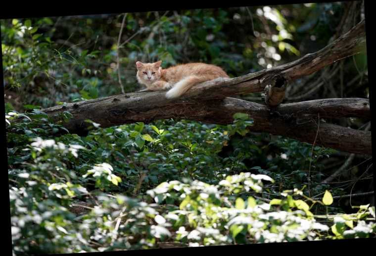 People Scrambling To Help Brazil's 'Island Of The Cats,' Left Starving By Pandemic