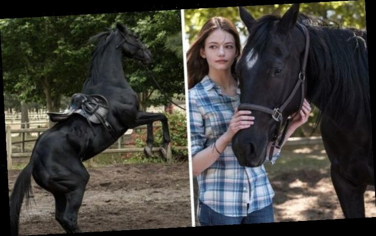Black Beauty reboot streaming: Will the new Black Beauty movie be on Netflix?