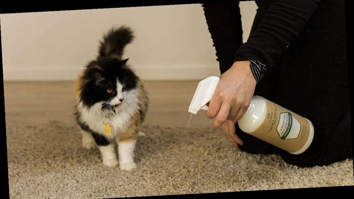 The 6 Best Pet Stain Removers