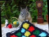 Chipmunks carry out human activities like knitting in adorable snaps