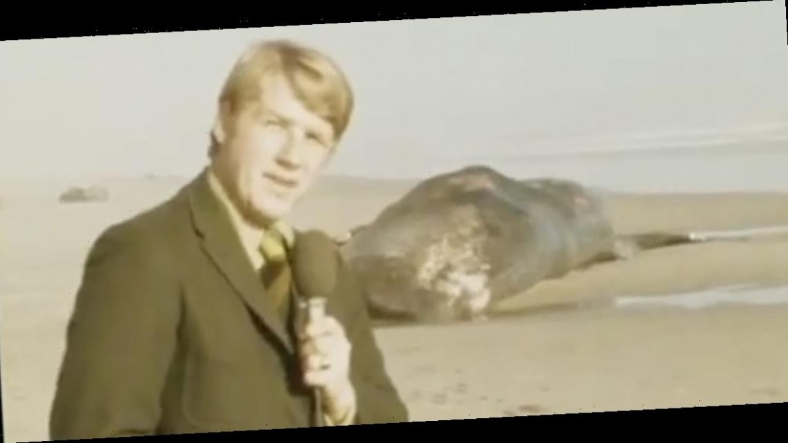 It's been 50 years since Oregon officials tried to blow up a dead whale and accidentally covered a town with blubber