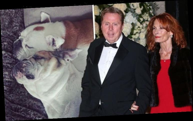 Harry Redknapp and wife's heartbreak as family dog dies days after vet visit 'So sad'