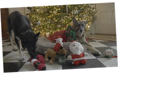 The 2020 Christmas Video From Joe Biden's Dogs Showed Their Different Personalities