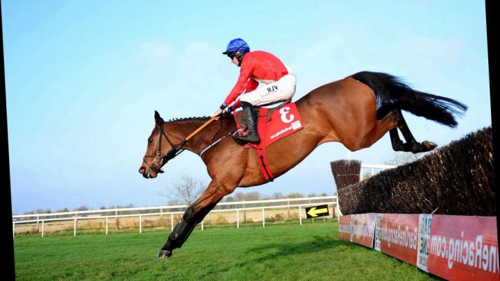 Envoi Allen makes it eleven wins from eleven with Punchestown stroll as Asterion Forlonge departs at first fence