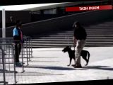 Miami Heat to Use COVID-19 Detection Dogs to Screen Fans Attending Games