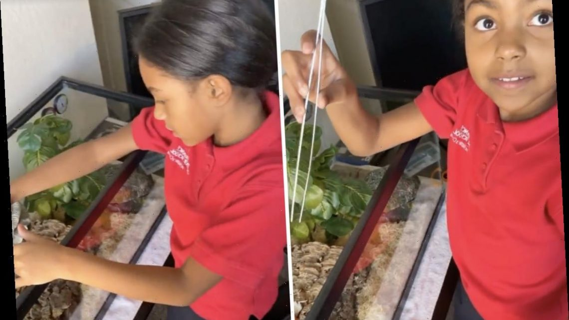 Teen Mom Briana DeJesus' ex Devoin posts disturbing video showing daughter Nova, 9, feeding DEAD MOUSE to his pet snake