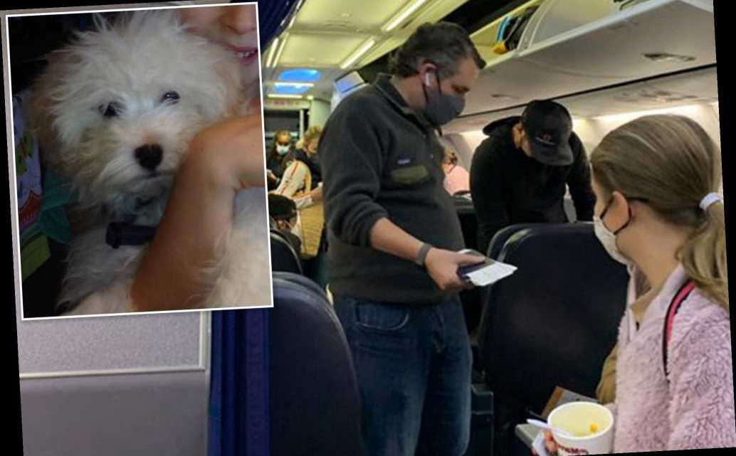 Ted Cruz slammed for reportedly leaving pet poodle home alone during Cancun trip