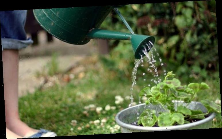 Gardening expert shares how to slowly water your plants using a 'nappy'