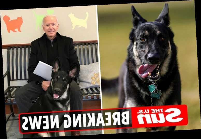 Biden's dog Major 'bites ANOTHER person at White House who needed medical attention'