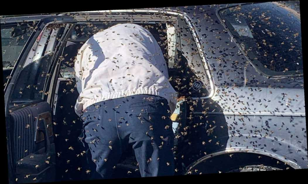 Bees swarm car parked at supermarket before firefighter removes them