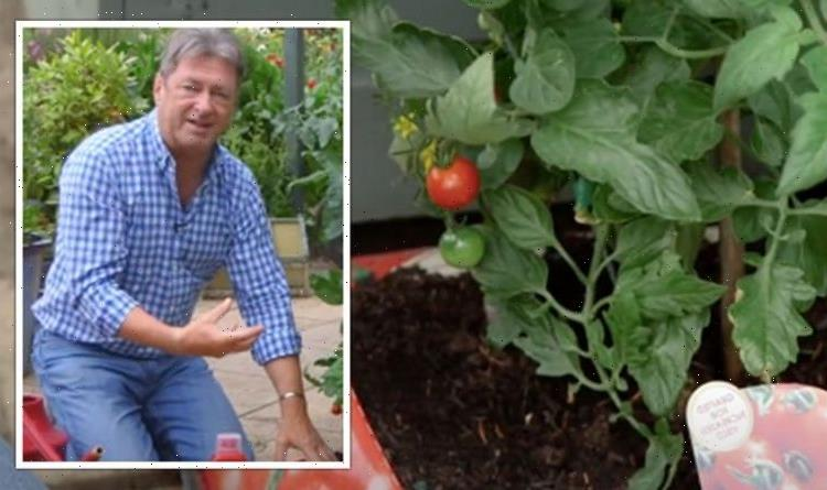 Alan Titchmarsh warns against letting tomato plant soil dry out or risk 'blossom end rot'
