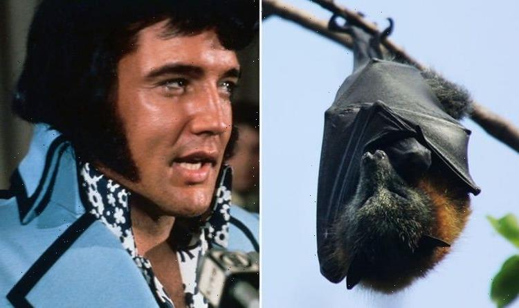 Elvis Presley: How King dealt with a bat and bees hiding in Graceland's mysterious attic