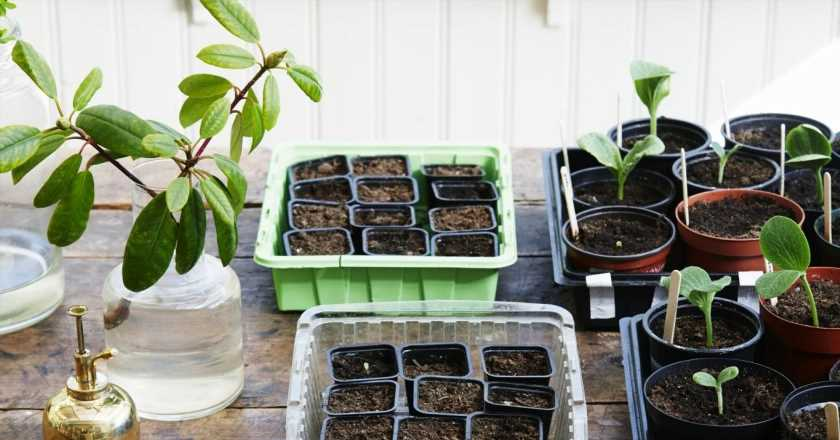 How to grow your own herbs, veggies and fruits from seeds, whatever your gardening skill
