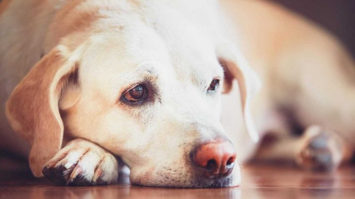 Mysterious outbreak of vomiting in dogs in 2020 was caused by a coronavirus similar to Covid-19, study finds
