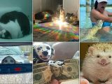 Pet owners share 'threatening' photographs of their 'demonic' animals