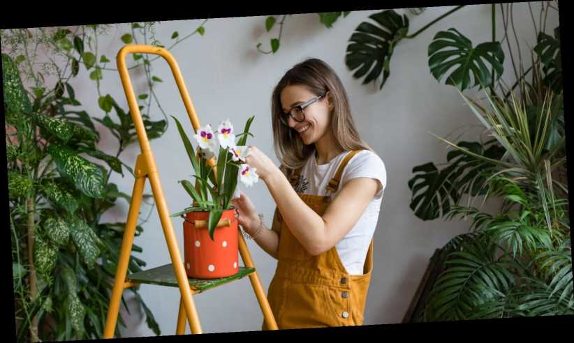 These Are The Best Indoor Plants For Beginners