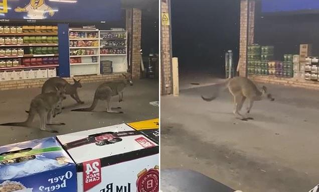 Bizarre moment three kangaroos hop into drive through bottle shop
