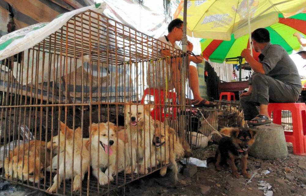 China makes public slaughter of live animals illegal