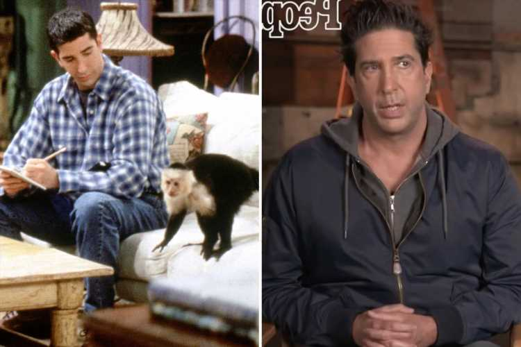 Friends' David Schwimmer reveals REVOLTING encounter with Ross' monkey on set – and snaps 'he needed to f*** off!'