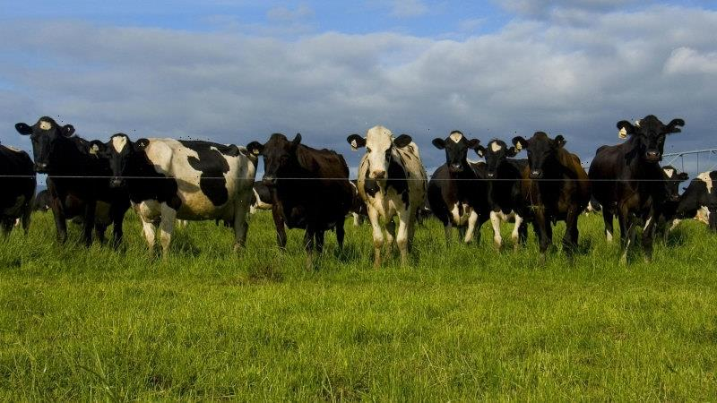 Government offers cash to take the stink out of cow burps