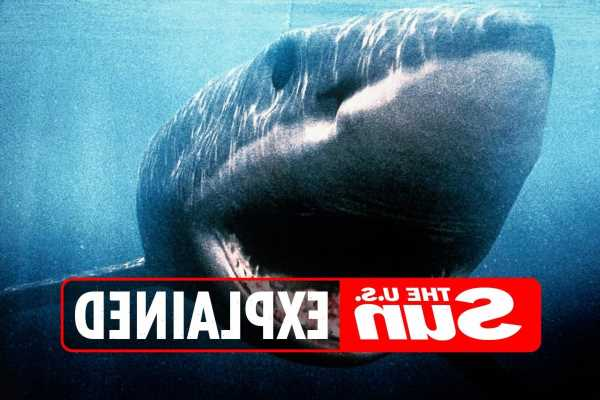 Megalodon sightings: When and where have the giant sharks been spotted?