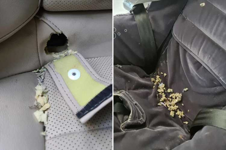Mum issues grim warning after discovering RAT were living under back car seat & almost chewed through kids' seat belts