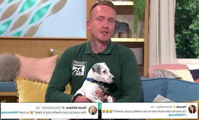 Owners abandoning lockdown puppies are branded 'shameful'
