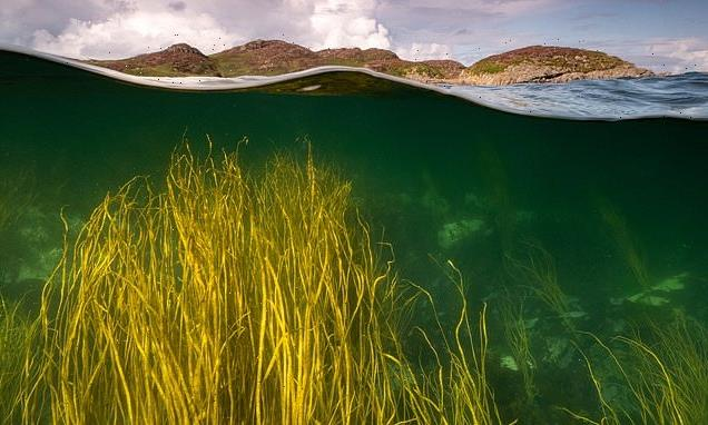 Rewilding our OCEANS will be 'as important as reforestation'
