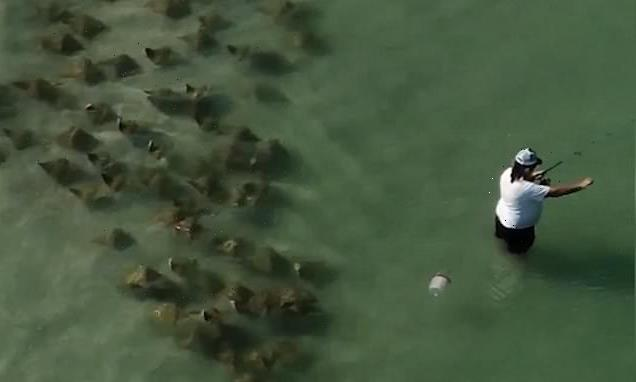 They're behind you! Florida fisherman fails to spot 'sneaky' stingrays