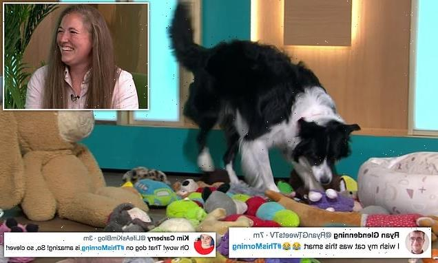 Border Collie who can identify his 80 toys stuns This Morning viewers