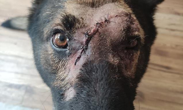 Brave PD Kaiser 'lucky to be alive' after being stabbed five times