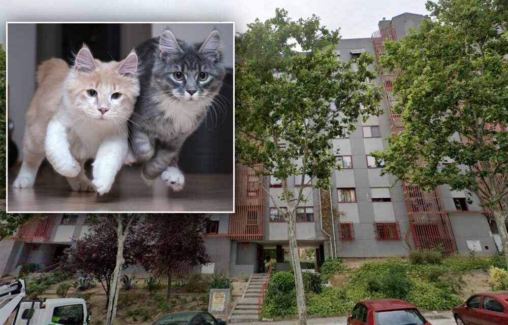 Decomposing body of 79-year-old woman found partially eaten by her cats