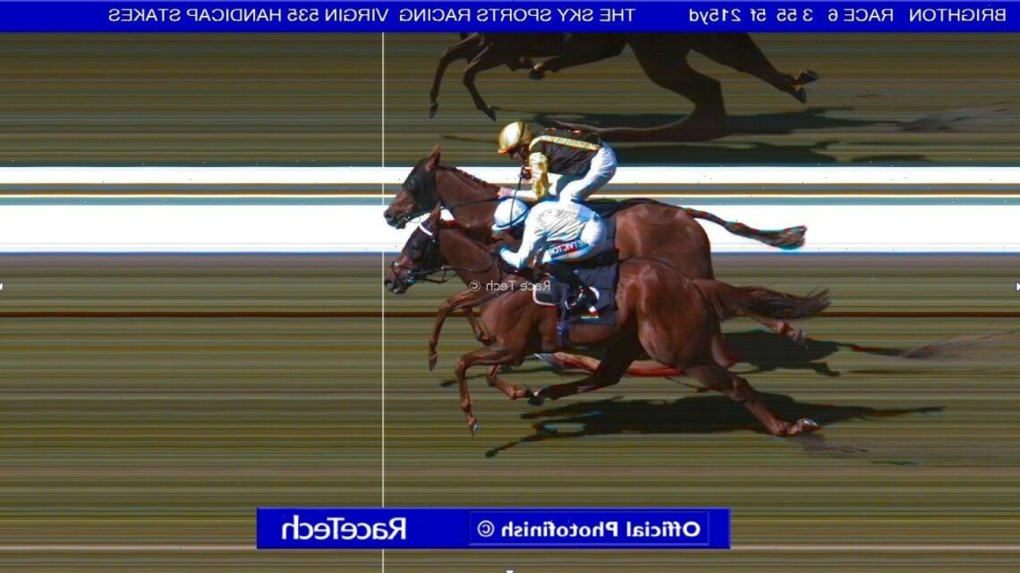 Dramatic dead-heat photo finish at Brighton as judges can't split joint-winners to leave punters scratching heads