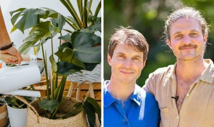 Gardening: The Rich brothers' tips on bringing nature indoors – 'shower with your plant!'