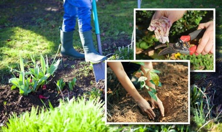 June garden jobs: What to do in the garden this month – top 4 ideas