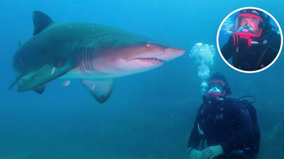 Watch Chris Hemsworth Go Swimming with Sharks: 'Should I Be Nervous?'