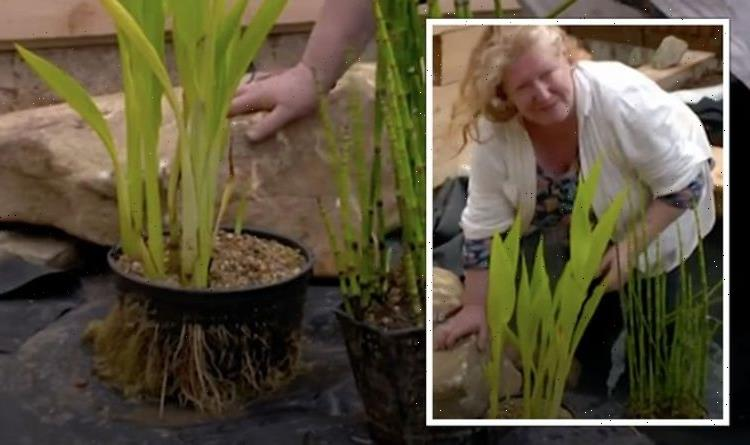 Garden Rescue: Charlie Dimmock shares tips on planting 'most glamorous pond plants'