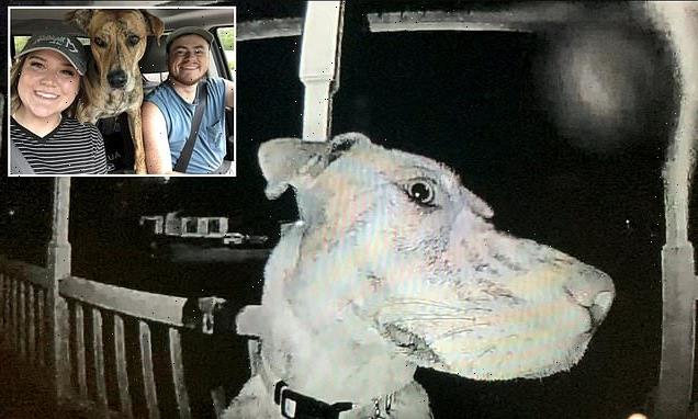 Missing dog RINGS THE BELL to be let back inside after returning home