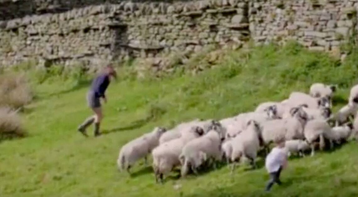 Our Yorkshire Farms Amanda Owen takes swipe at Clive after losing sheep