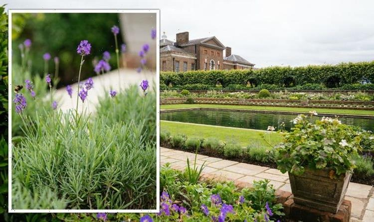 Sunken Garden: Palace garden inspired by Diana – how to grow Princess' 'favourite' flowers