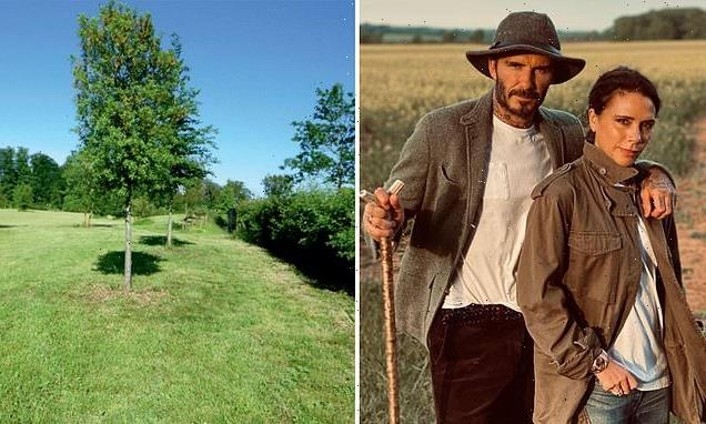 The Beckhams lay out plans for their Cotswolds 'wildlife corridor'