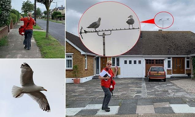 'Like a scene from The Birds': Posties say SEAGULLS are attacking them