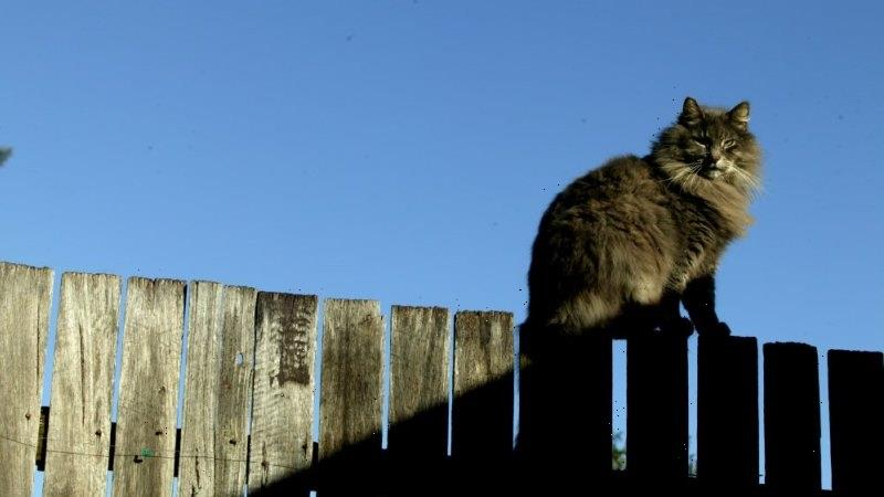 Neighbours have right to retrieve lost balls, cats under new Belgian law