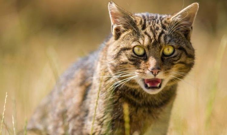 Victory as Government pledges to halt decline of wildlife with Green Bill
