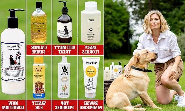 We test the barking mad: Designer shampoo for dogs!