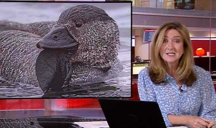 BBC's Victoria Derbyshire shocked at 'flabbergasting' duck talking vid 'Is this a hoax?'