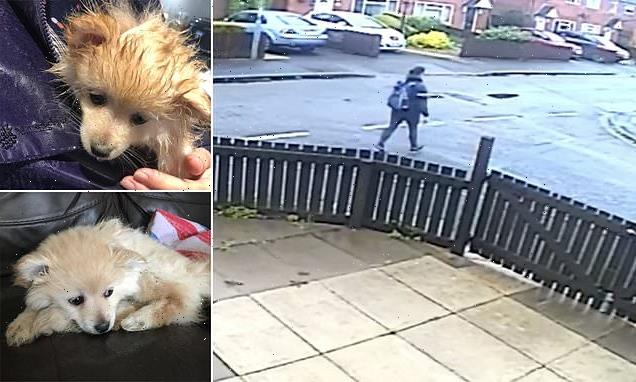 Dog owner is banned from keeping animals after burying puppy alive