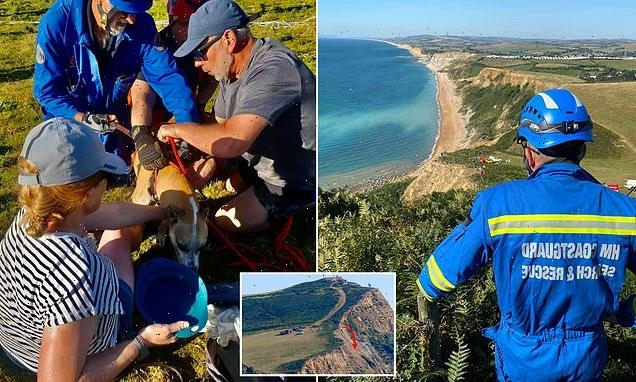 Laney the dog survives fall over edge of 515ft seaside cliff