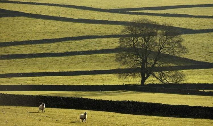 Most green spaces 'are not protected': Time for government to safeguard UK nature